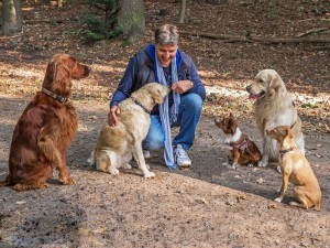 Hundetrainer Stefan Thal - Anmeldung zum Hundetraining - 1