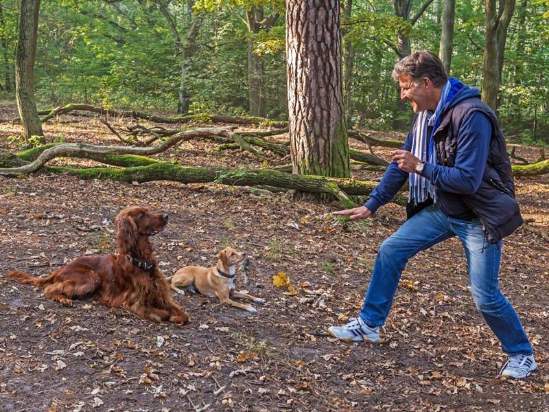Hundetrainer Stefan Thal - Einzeltraining - 1