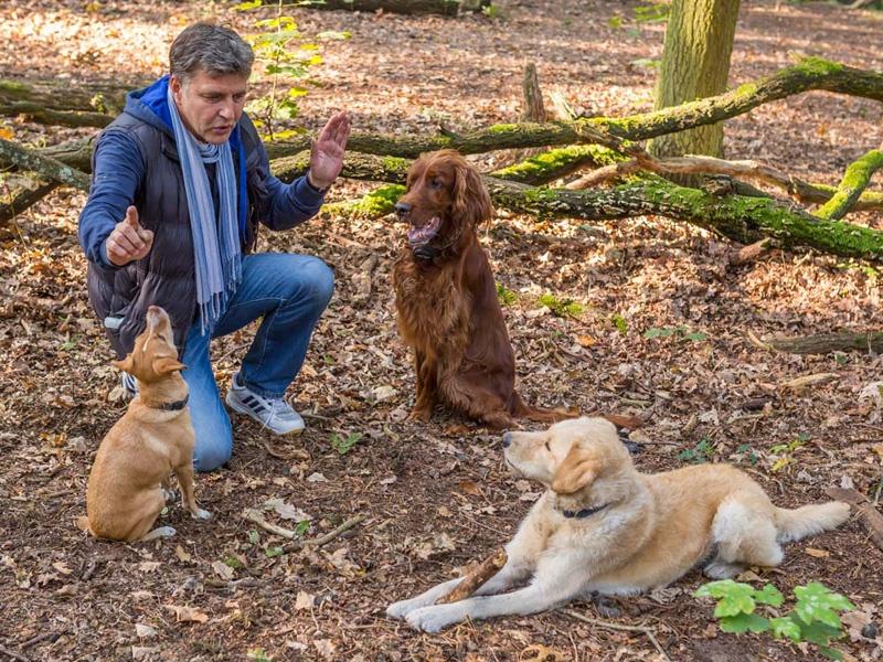 Hundetrainer Stefan Thal - Trainingsmethode - 1