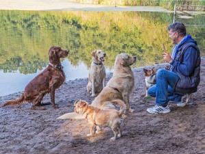 Hundetrainer Stefan Thal - 9