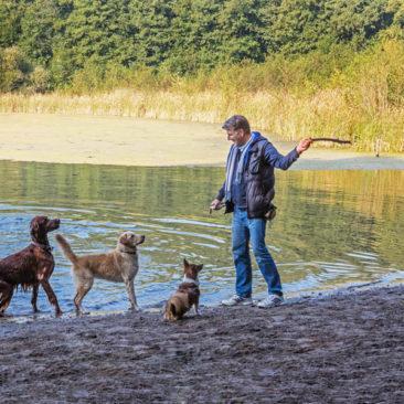 Hundetrainer Stefan Thal - 5