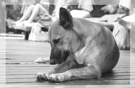 """Hundetrainer Stefan Thal """"Namie"""" - 1"""