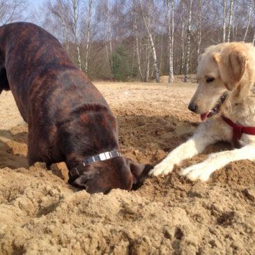 Hundetrainer Stefan Thal - Krümel & Loco