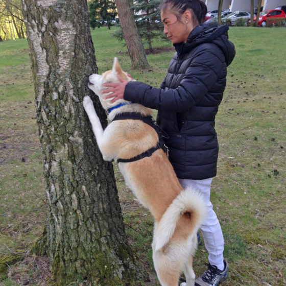 "Hundetrainer Stefan Thal ""Hachiko"" - 2"