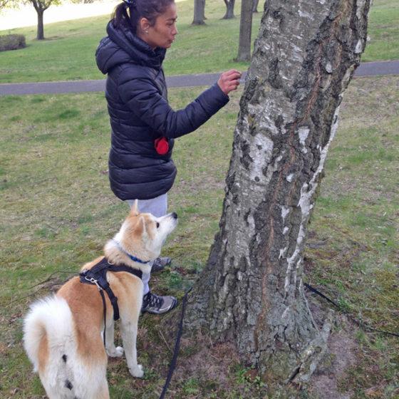 "Hundetrainer Stefan Thal ""Hachiko"" - 1"