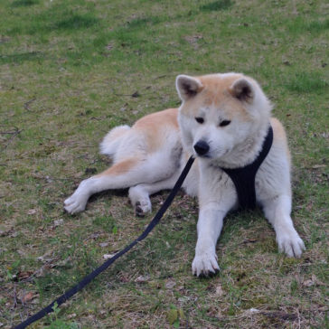 "Hundetrainer Stefan Thal ""Hachiko"" - 3"