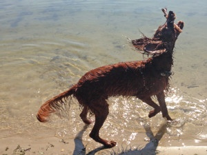 Hundetrainer Stefan Thal - Trainingsmethode - 3