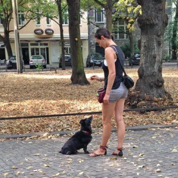 """Hundetrainer Stefan Thal - """"Lina"""" - 5"""