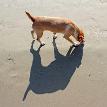 """Hundetrainer Stefan Thal - """"Lotte"""" - 17"""