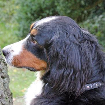 "Hundetrainer Stefan Thal - ""Ginny"" - 4"