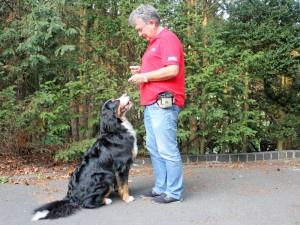 Hundetrainer Stefan Thal - Einzeltraining - 3