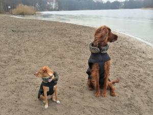 Hundetrainer Stefan Thal - friends - 1