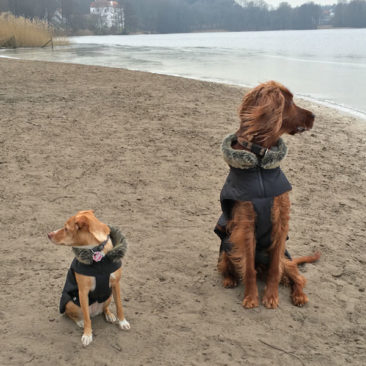 Hundetrainer Stefan Thal - Dogwalken Impressionen - 1