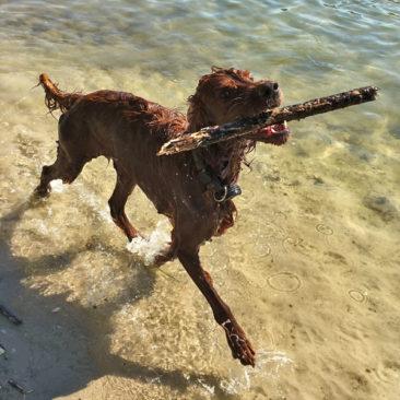 Hundetrainer Stefan Thal - Dogwalken Impressionen - 7