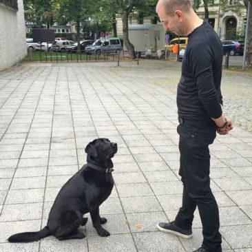 """Hundetrainer Stefan Thal - """"Fritz"""" - 2"""