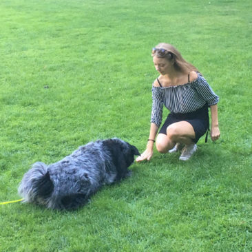 "Hundetrainer Stefan Thal - ""Sally"" - 6"