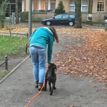 """Hundetrainer Stefan Thal - """"Bruno"""" - 7"""