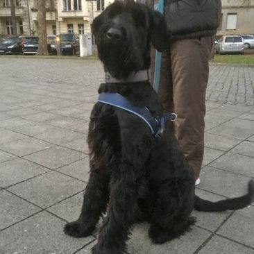 """Hundetrainer Stefan Thal - """"Danny"""" - 2"""