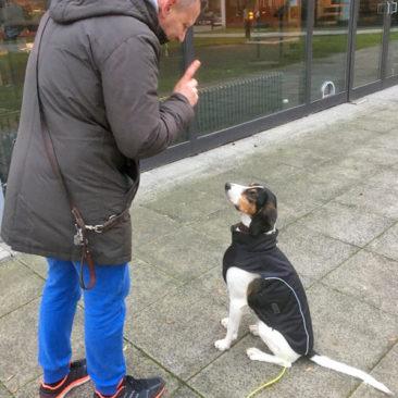 """Hundetrainer Stefan Thal - """"Julius"""" - 3"""