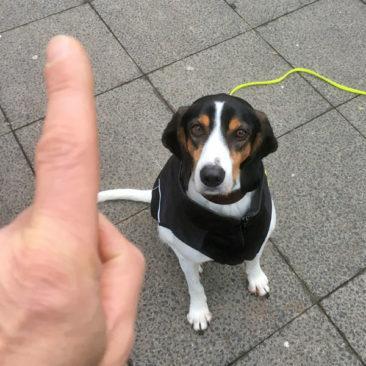 """Hundetrainer Stefan Thal - """"Julius"""" - 2"""