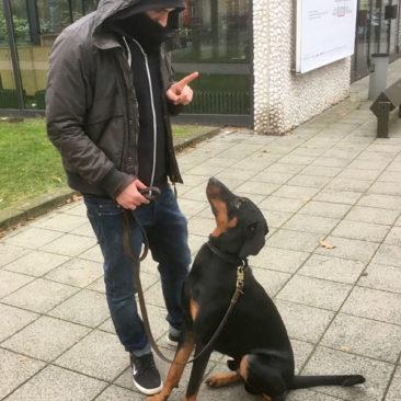 """Hundetrainer Stefan Thal - Junghundekurs- """"Drogo"""" - 2"""