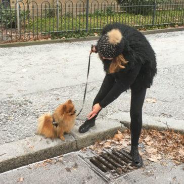 "Hundetrainer Stefan Thal - ""Gismo"" - 5"