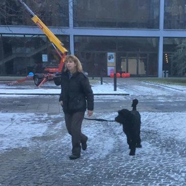 """Hundetrainer Stefan Thal - """"Danny"""" - 3"""