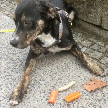 """Hundetrainer Stefan Thal - """"Scuby"""" - 4"""