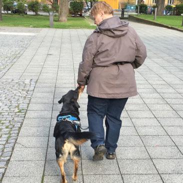 "Hundetrainer Stefan Thal - ""Nono"" - 3"