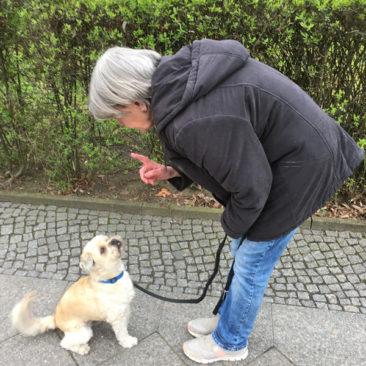 Hundetrainer Stefan Thal - Benni - 1