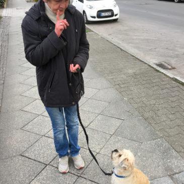 Hundetrainer Stefan Thal - Benni - 3