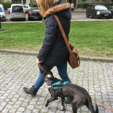 Hundetrainer Stefan Thal - Max - 4