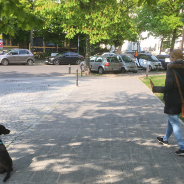 Hundetrainer Stefan Thal - Max - 3