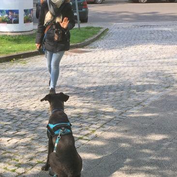 Hundetrainer Stefan Thal - Max - 1