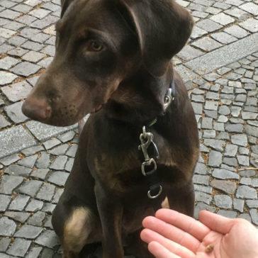 "Hundetrainer Stefan Thal - ""Mozzie"" - 2"