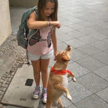 """Hundetrainer Stefan Thal - """"Lotte"""" - 29"""