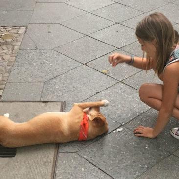 """Hundetrainer Stefan Thal - """"Lotte"""" - 28"""