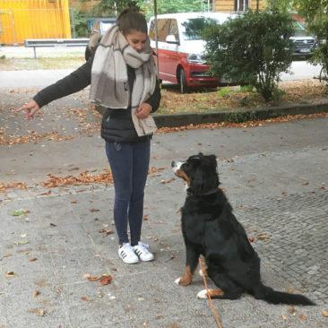 """Hundetrainer Stefan Thal - """"Thilda"""" - 2"""