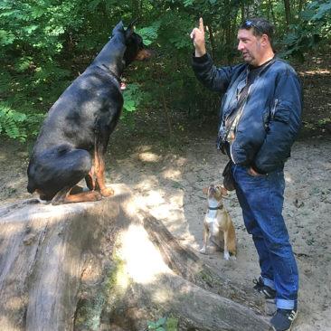 Hundetrainer Stefan Thal - Sven - 9