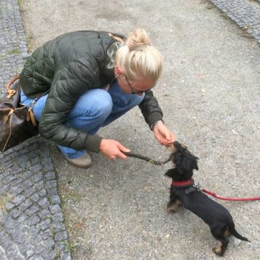 "Hundetrainer Stefan Thal ""Willy"" - 4"
