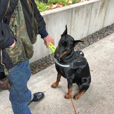 Hundetrainer Stefan Thal - Sven - 14