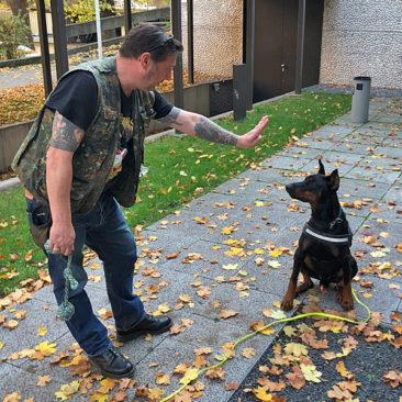 Hundetrainer Stefan Thal - Sven - 2