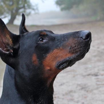 Hundetrainer Stefan Thal - Sven - 18