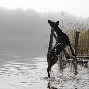 Hundetrainer Stefan Thal - Sven - 17