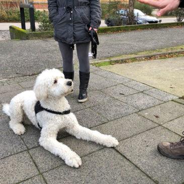 "Hundetrainer Stefan Thal - ""Henry"" - 2"