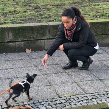 "Hundetrainer Stefan Thal - ""Lylo"" - 1"