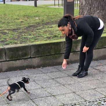 "Hundetrainer Stefan Thal - ""Lylo"" - 3"