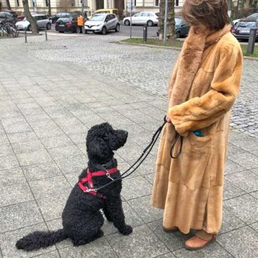 """Hundetrainer Stefan Thal - """"Bou Bou"""" - 2"""