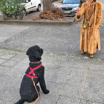 """Hundetrainer Stefan Thal - """"Bou Bou"""" - 1"""