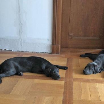 "Hundetrainer Stefan Thal - ""Curt+Lola"" - 5"